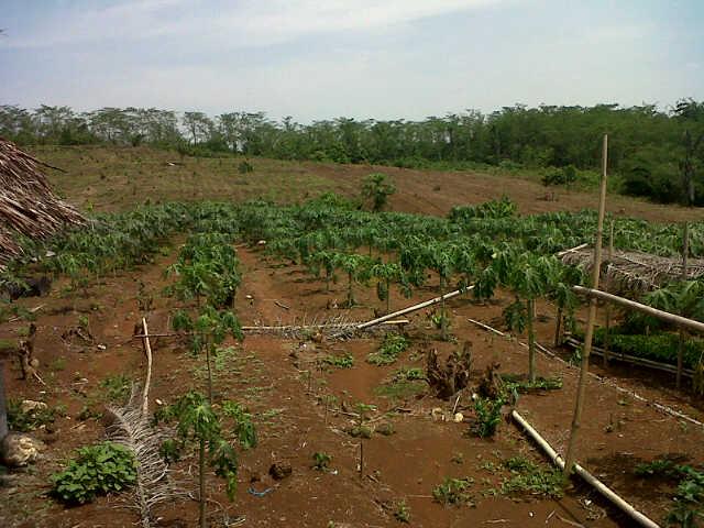tanah besar
